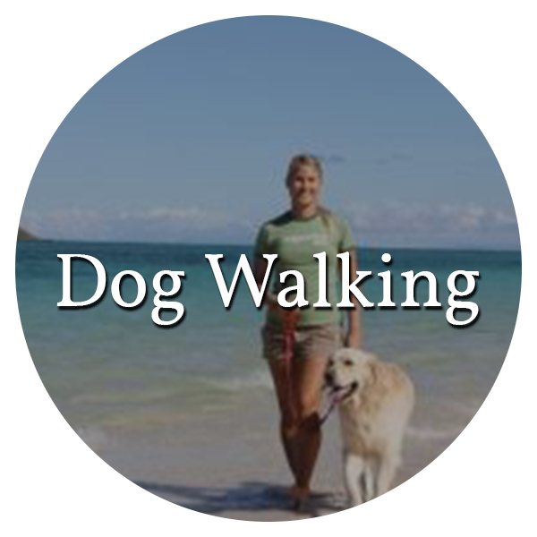 link to dog walking page