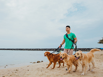 image of multiple dogs on a leash