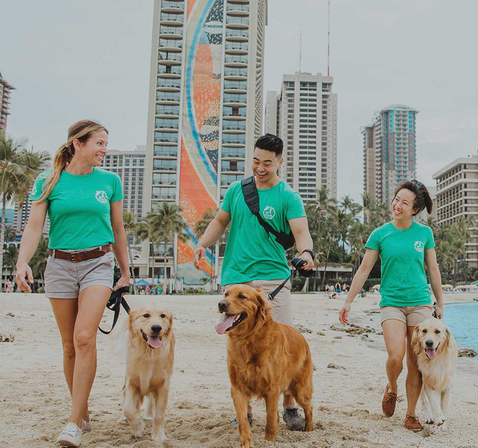 image of dogs walking at the beach